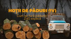 INVESTIGATION: The Forest Thefts Part IV. ZdG Explains How the Wood is Stolen.