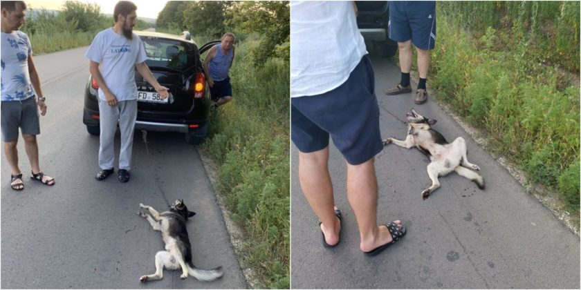 У попа была собака. Прокуроры закрыли уголовное дело по делу священника Валуцы, который привязал собаку к автомобилю