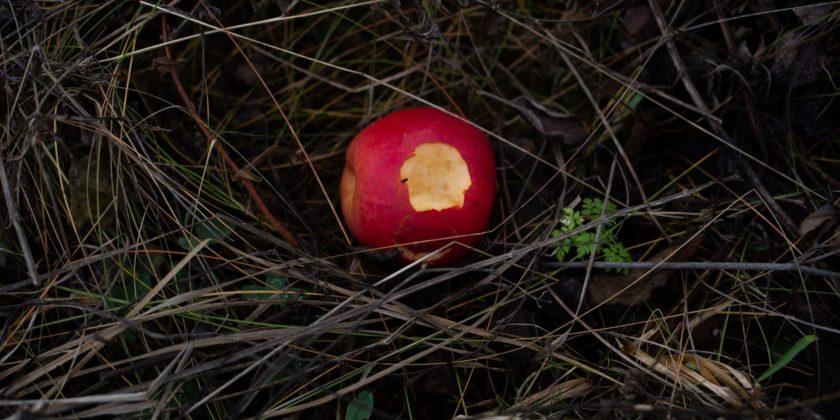 Там, где на братских могилах растут яблони: четыре истории о реалиях Голодомора