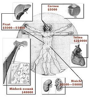 289-organe