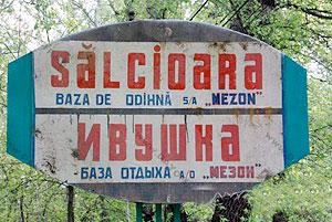 451-SALCIOARA