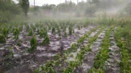 grindina pagube ploi 28 mai 2016