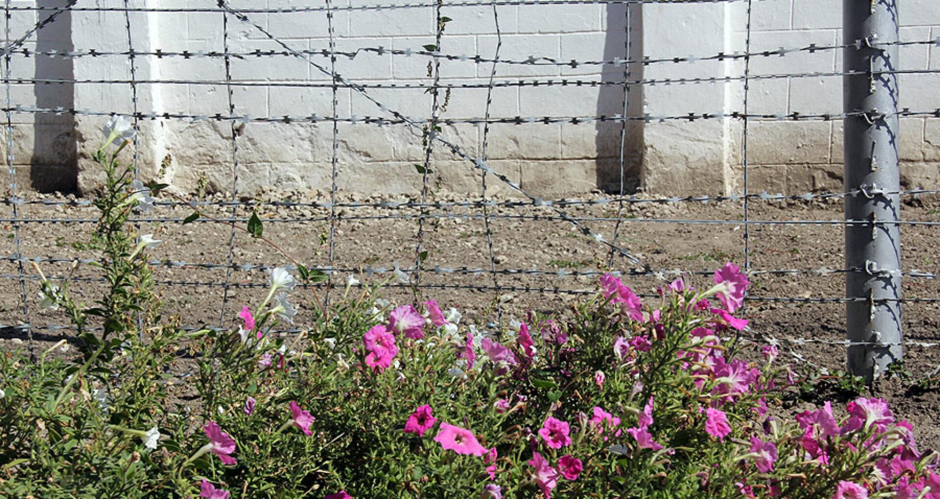 Libertate dulce-amară: Sârma ghimpată din sufletul foștilor deţinuți
