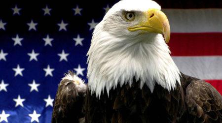 588-american-eagle