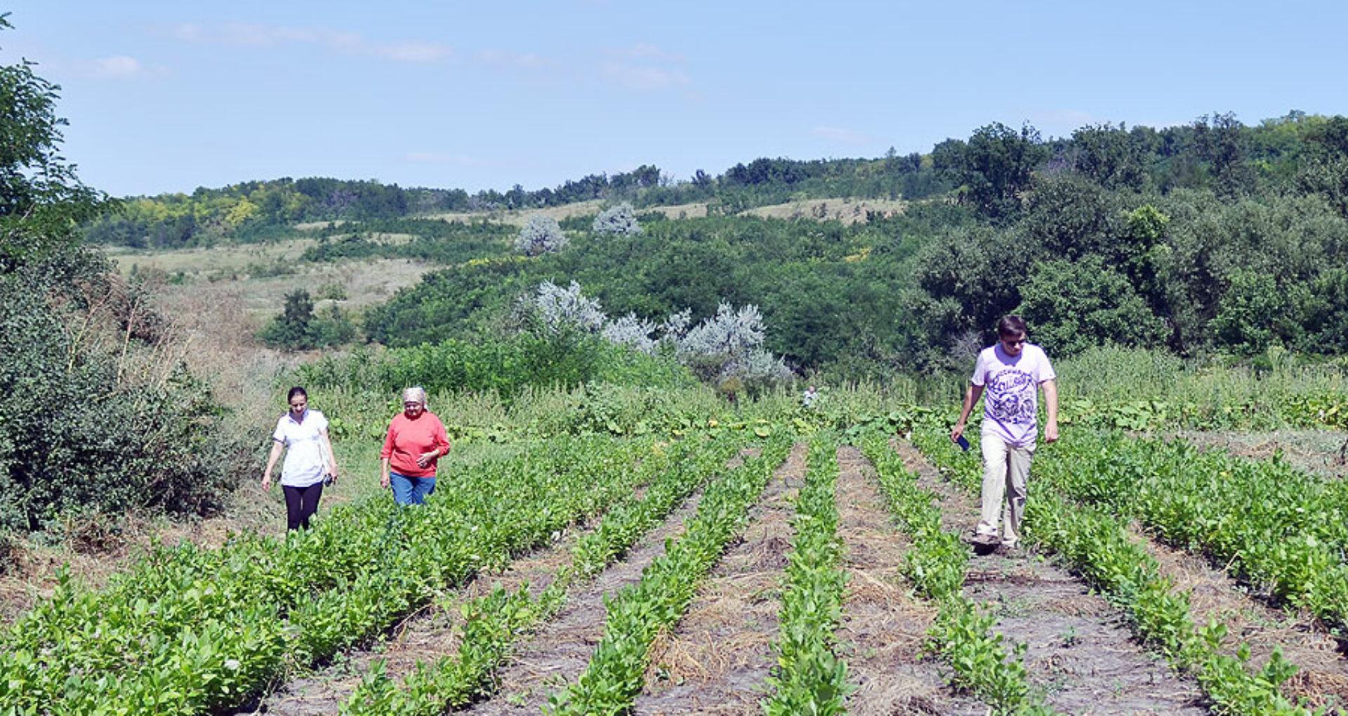 Povestea unui pădurar şi pepiniera cu care vrea să renască pădurile Moldovei