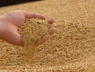 """VIDEO/ PAS cere Guvernului să interzică exportul de grâu din rezerva de stat: """"În aceste clipe partenerul lui Igor Dodon încarcă grâul în portul Giurgiulești"""""""