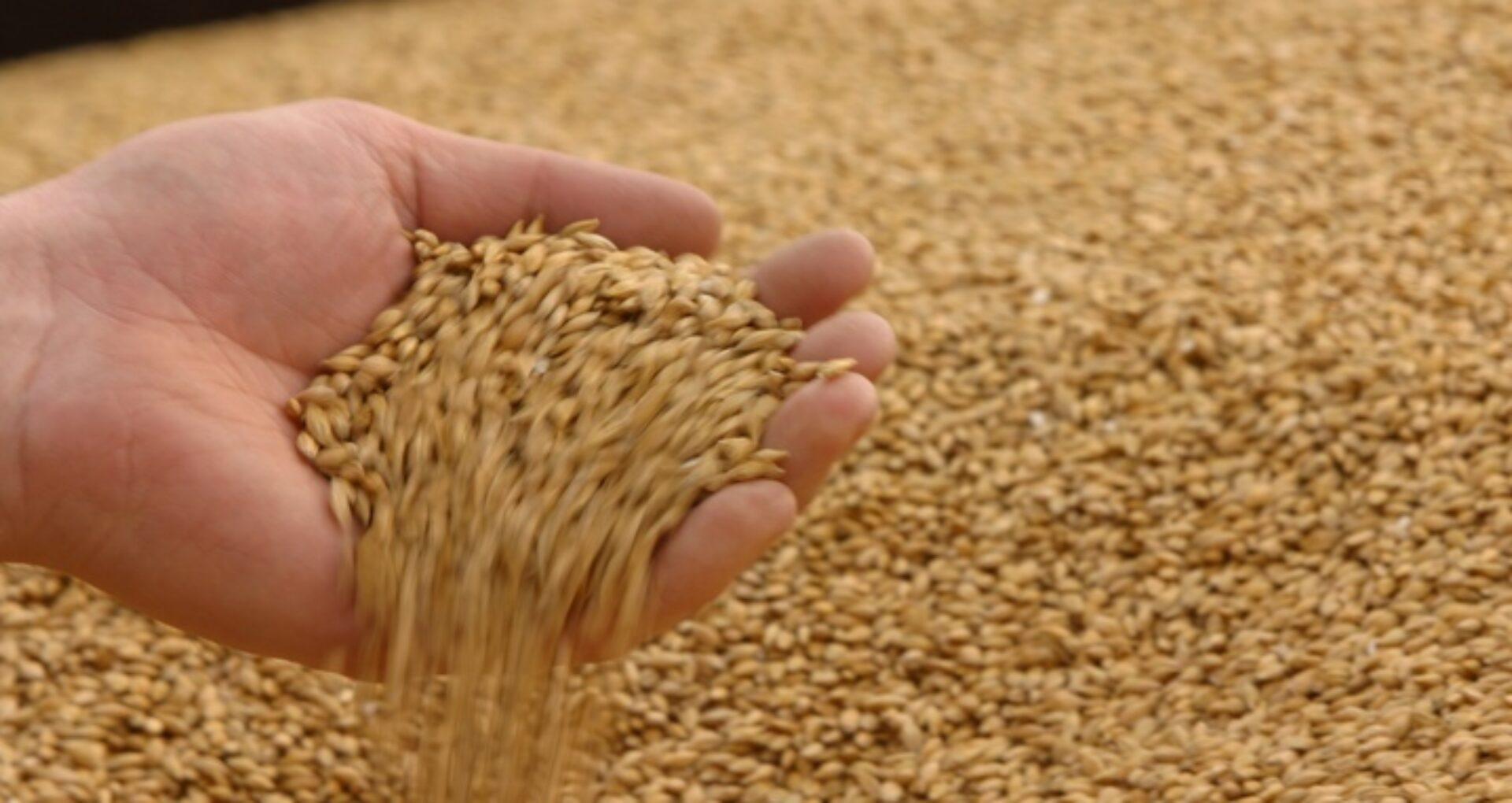 """LIVE/ Mai mulți oameni s-au adunat în portul Giurgiulești pentru a opri exportul de grâu: """"Camioanele tot vin și vin cu grâu"""""""