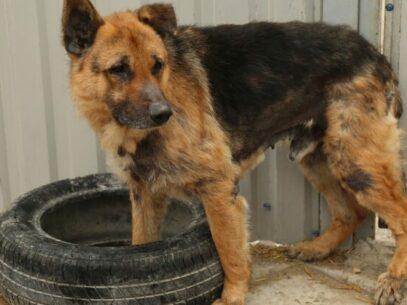 VIDEO/ Câinele este cel mai bun prieten al omului, dar cine este omul pentru câine? Cum (nu) este pedepsită în R. Moldova violența față de animale