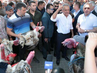 DOC/ Ce s-a întâmplat cu cei cinci curcani care pe 9 iunie 2019 au fost aruncați de către democrați, peste gardul Președinției și ce pedeapsă au primit autorii gestului