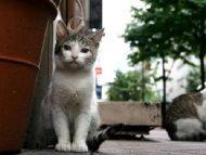 Primaria or. Ialoveni dă start unei campanii de sterilizare a animalelor de companie. Serviciul este gratuit