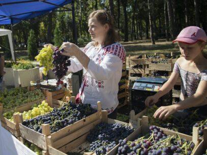 """VIDEO/Femeile care se ambiționează să facă agricultură în R. Moldova: """"Ne-am dorit foarte mult să arătăm că putem fi un exemplu de solidaritate feminină"""""""