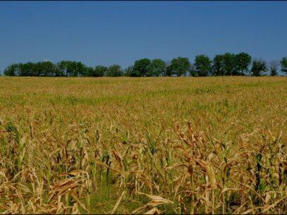 Guvernul a aprobat condiții mai favorabile de aplicare la Programul de subvenționare a dobânzilor și Programul de rambursare a TVA de către producătorii agricoli afectați de calamitățile naturale