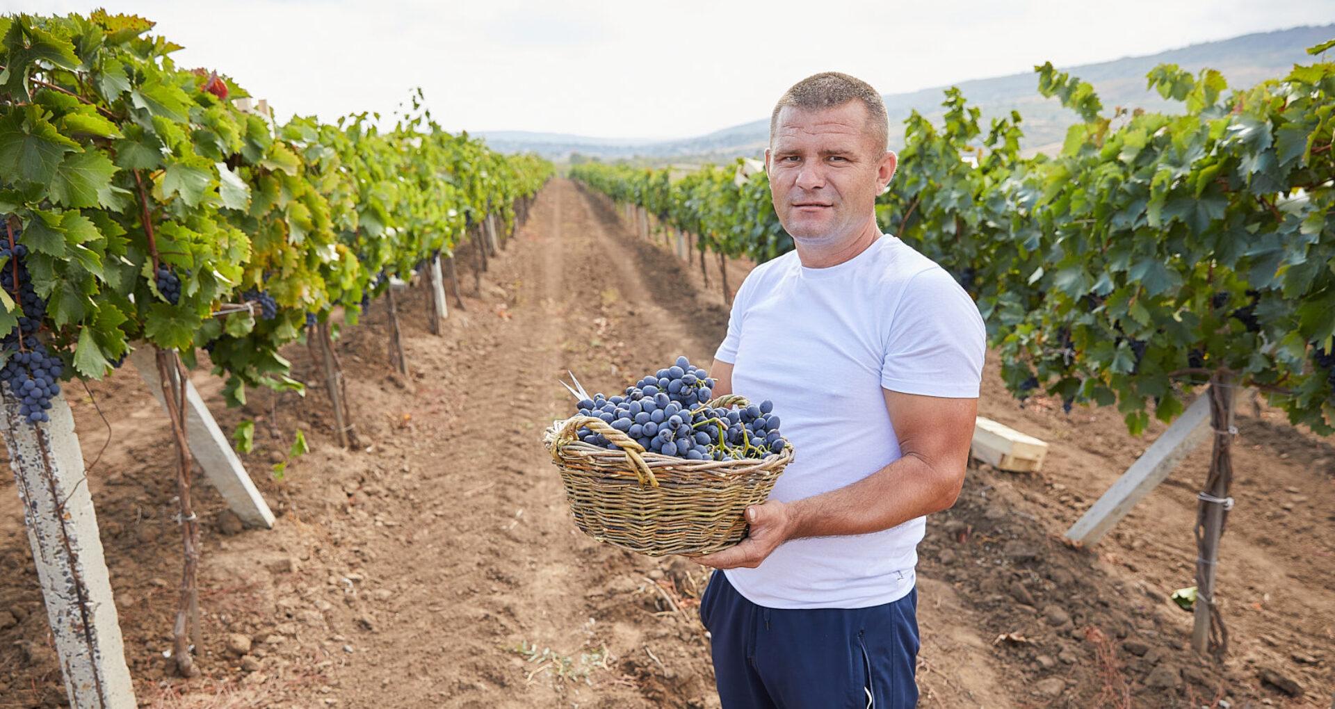 FOTO/De la șofer de curse lungi în străinătate, la agricultor în R. Moldova. Cum își crește afacerea Ion Buliga din Scoreni, Strășeni