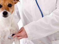 Parlamentul a aprobat un proiect care va reglementa activitatea medicilor veterinari de liberă practică