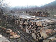 Parlamentul a votat în prima lectură un proiect cu privire la instituirea unui moratoriu, pe o perioadă de trei ani, asupra recoltării maselor lemnoase
