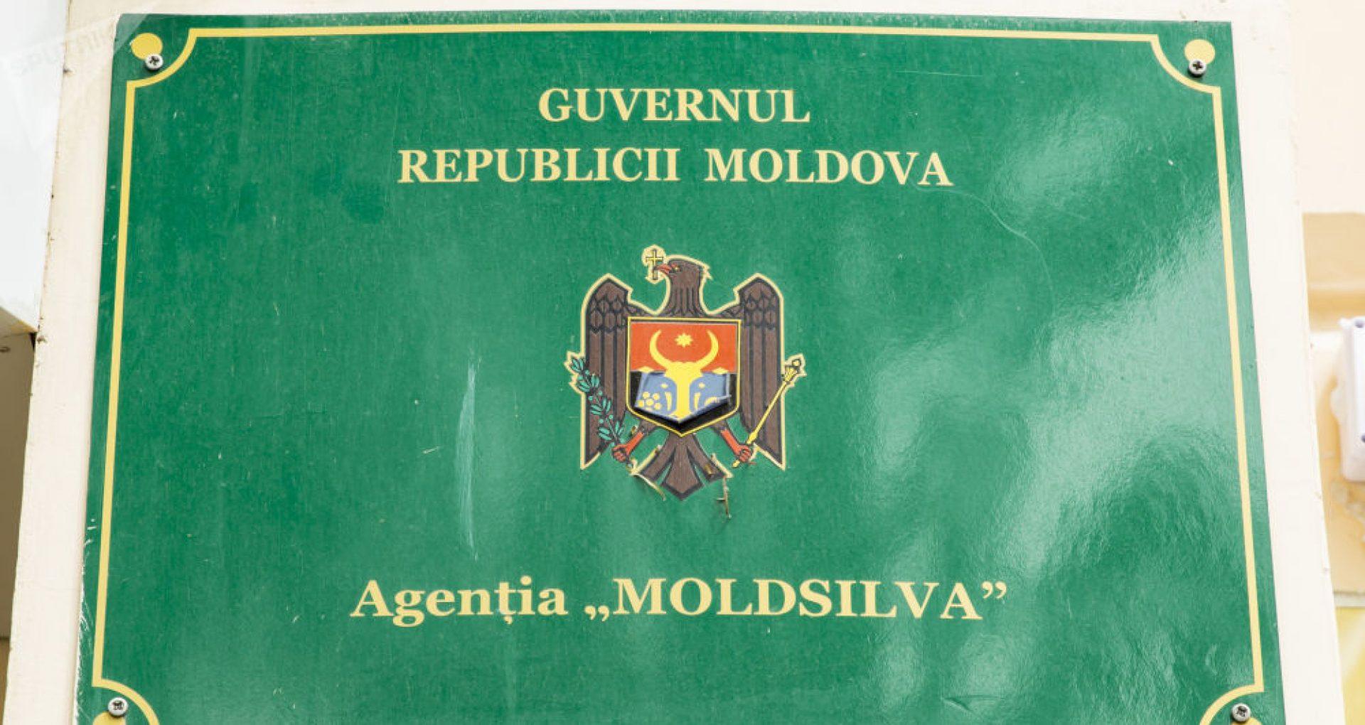 """PAS vrea un grup de lucru pentru investigarea situației de la Moldsilva: """"Se taie cu 40% mai mult lemn decât limita autorizată de Guvern"""""""