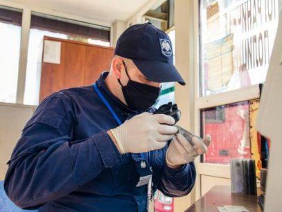 49 de teste COVID-19 falsificate, depistate la trecerea frontierei de stat  în zilele de weekend