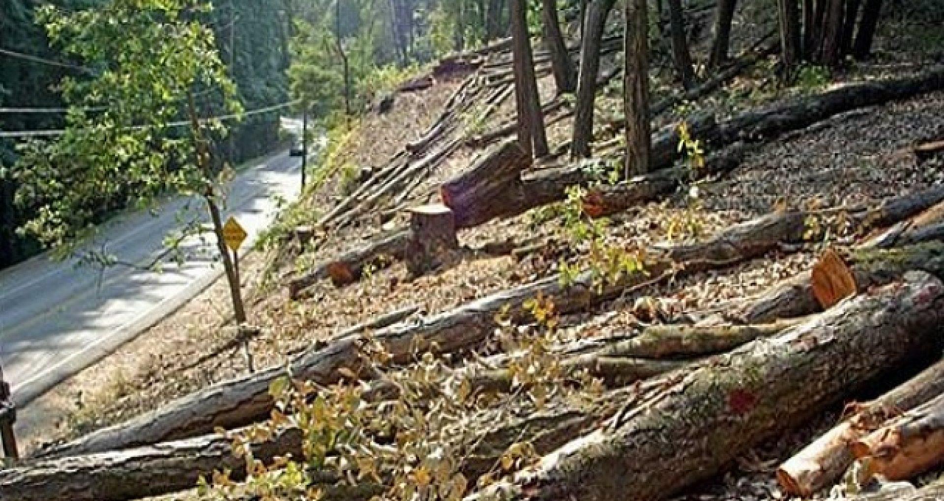 Jurnaliștii și alte persoane nu ar mai avea dreptul să filmeze tăierea copacilor din păduri în absența silvicultorilor. Explicațiile agenției Moldsilva