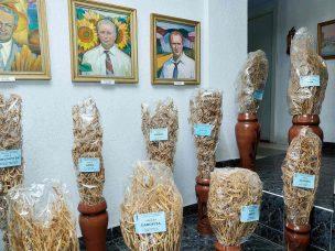 """""""Potențial pentru a cultiva soia nemodificată genetic în R. Moldova există"""". Susținerea acordată de UE"""