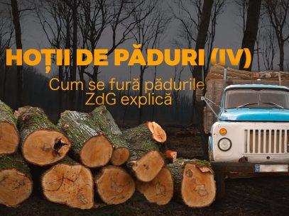 Hoții de păduri (IV). Cum se fură pădurile. ZdG explică