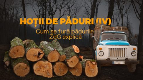 VIDEO/ Hoții de păduri (IV). Cum se fură pădurile. ZdG explică