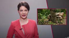 VIDEO/ Sinteza ZdG: Retrospectiva celor mai importante evenimente ale săptămânii. Ediția din 5 iunie 2021