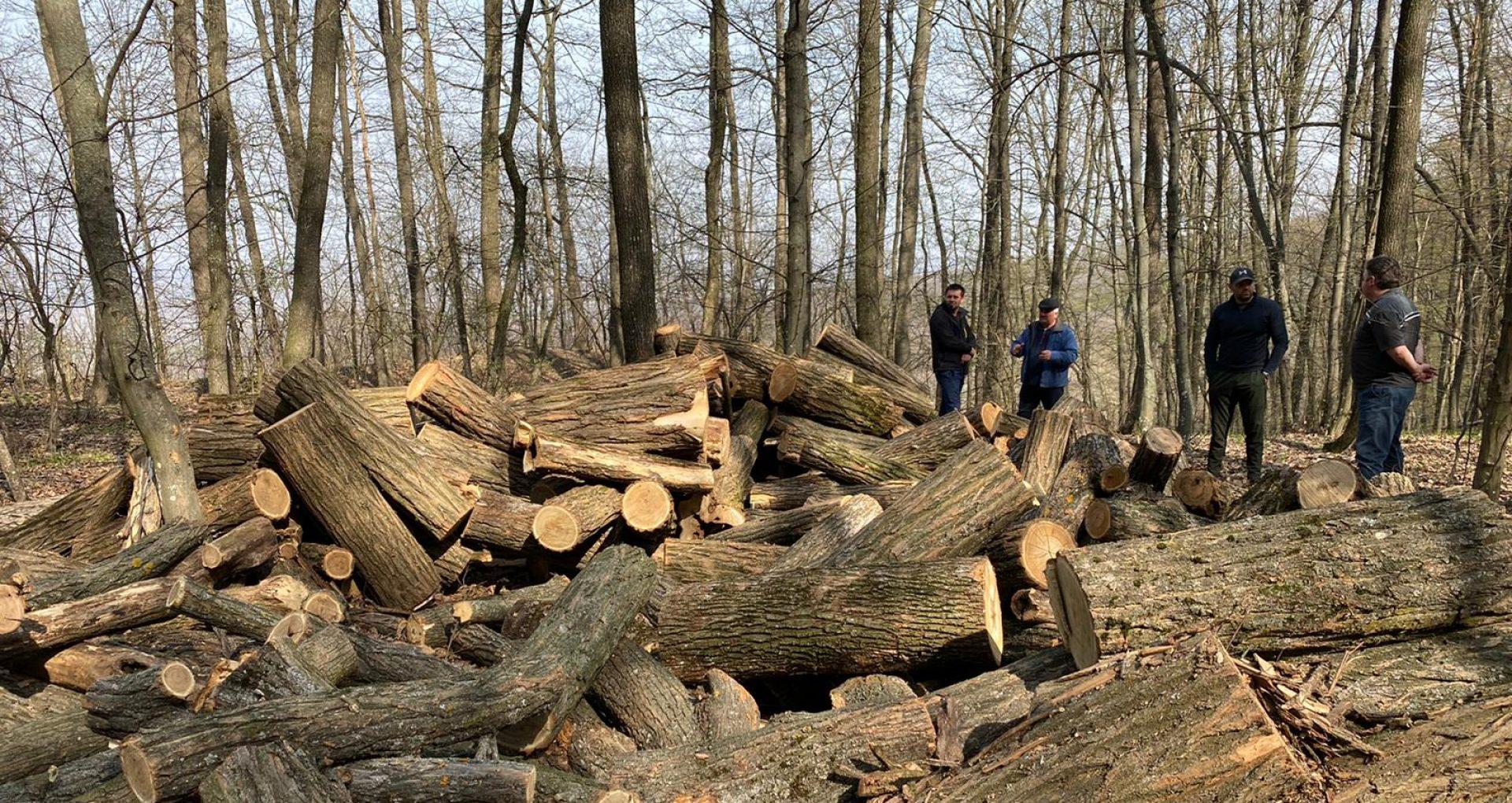 """O nouă reacție a Agenției Moldsilva după seria de articole """"Hoții de păduri"""", publicată de ZdG: """"Tălmăcirea milioanelor imaginare din silvicultură"""""""