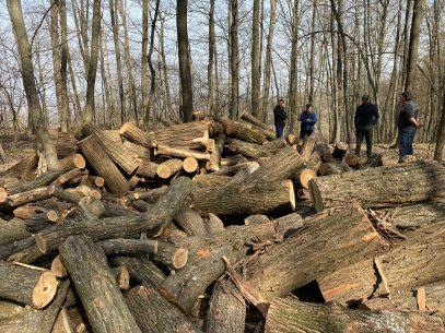 VIDEO/ Hoții de păduri