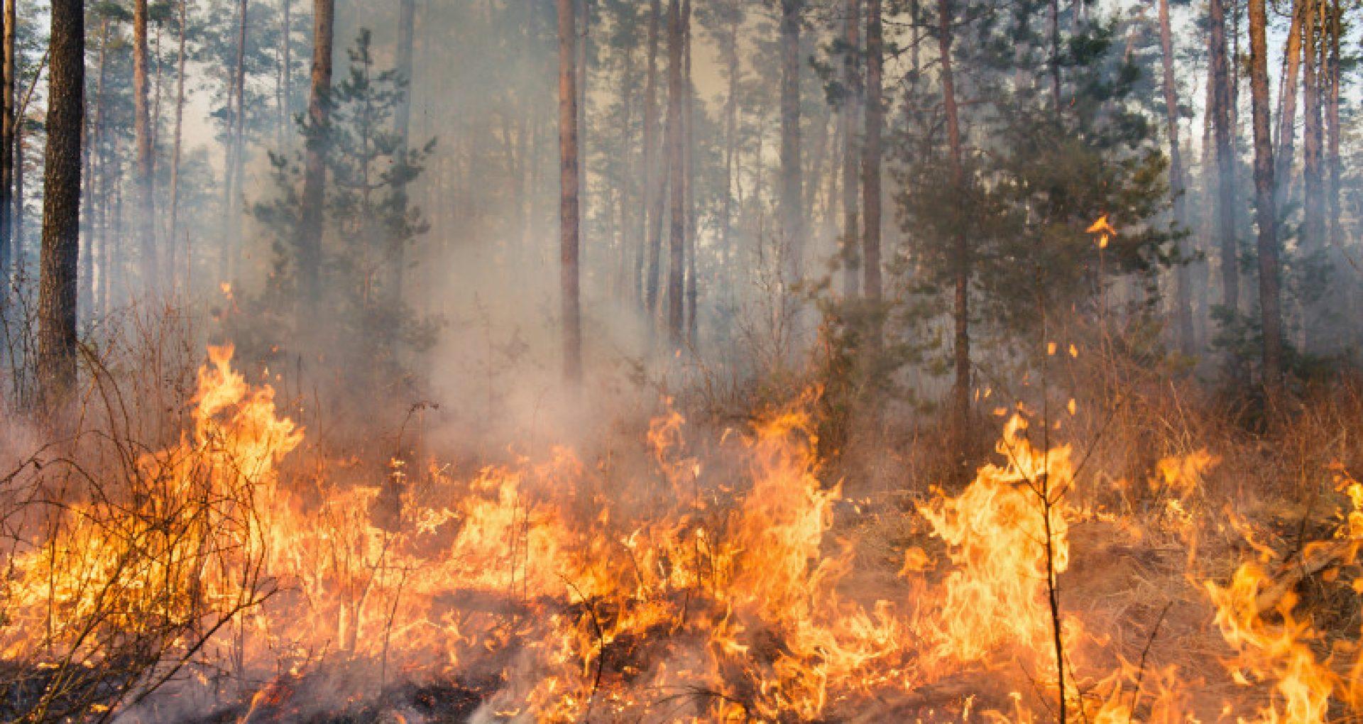 Valul sever de căldură provoacă incendii de vegetație în Bulgaria